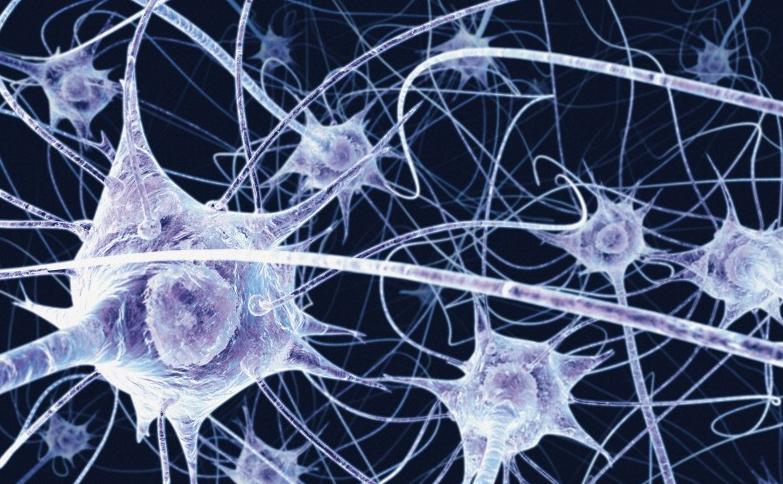 Neurones